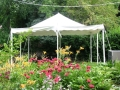 Where to rent CANOPY, 16x16 All Purpose Canopy Tent in Chicago IL